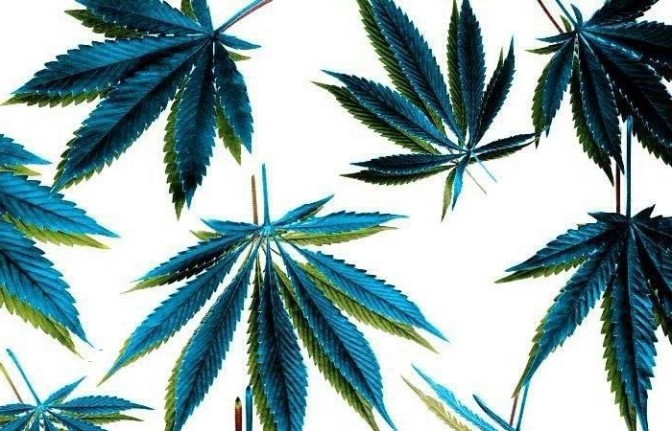 4/20 Día en Exigencia de la Legalización de la Planta Sagrada